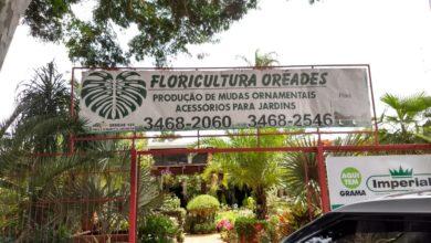 Floricultura Oréades, Produção de Mudas Ornamentais, Acessórios para Jardins, 61 3468-2060, Polo Verde, Viveiro de Plantas, Lago Norte, Saída Norte, Comércio Brasília