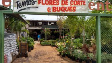 Viveiro Presente Verde, Polo Verde, Viveiro de Plantas, Lago Norte, Saída Norte, Comércio Brasília