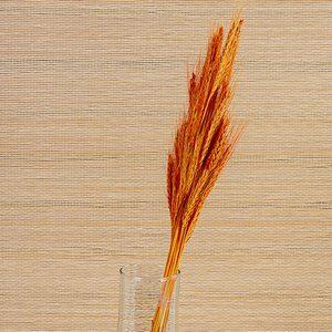 Flor de Trigo Desidratado 40 Hastes Laranja 85cm
