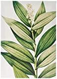 Arte Maníacos Quadro Decorativo em Tela Canvas Folhas Verdes - 32.5 x 23 cm, Verde,