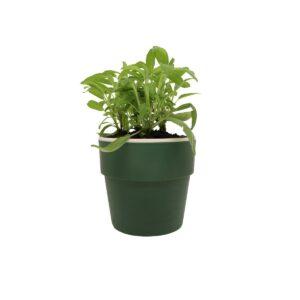 Vaso Autoirrigável Médio Verde Botânico Linha Plantar  Ou