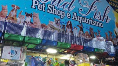 World Fish, Pet Shop e Aquarismo, Feira dos Importados de Brasília, ComercioBrasilia.