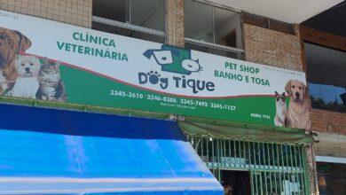Clínica Veterinária Dog Tique, Pet Shop, Banho e Tosa, Quadra 413 Sul, Asa Sul, Comércio Brasília
